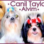 Canil Taylor Alvim